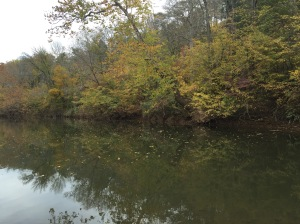 Fall colors showing along the Rivanna River at Darden Towe Park in Charlottesville.